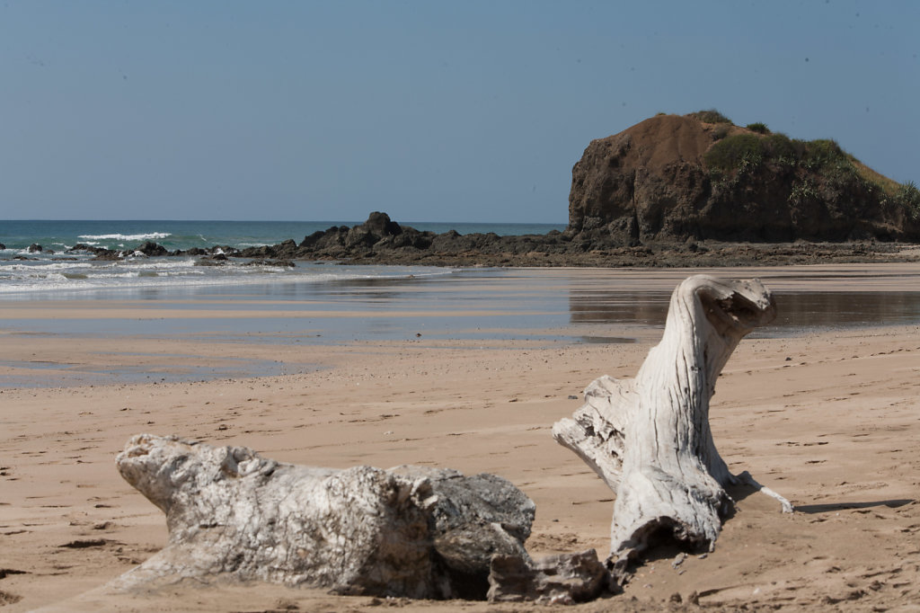 Nature morte tropicale